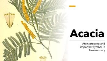 The symbol of acacia in Freemasonry