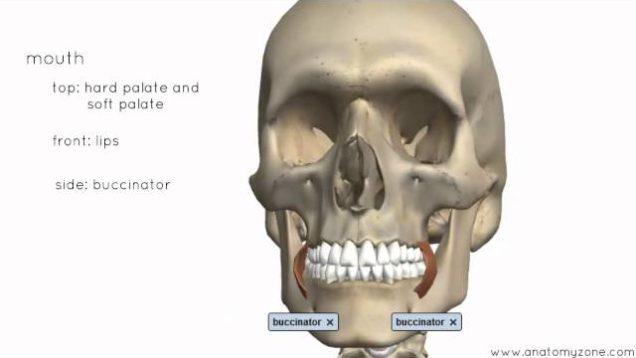 Head And Neck Archives - Free Medical Videos