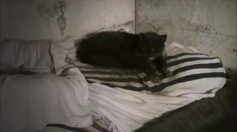 Ez a cica 20 évig élt egy pincében - Megható történet a megmeneküléséről