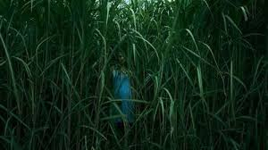 Download Movie: In The Tall Grass (2019) Mp4
