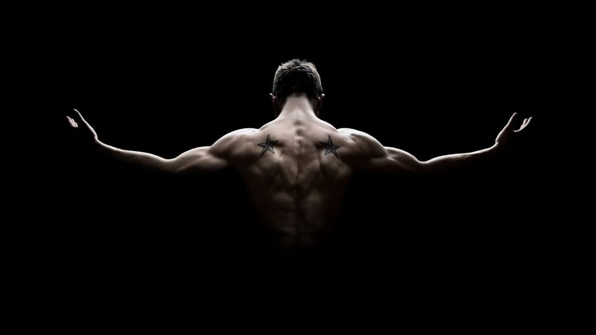 About Free Muscle Building Tips