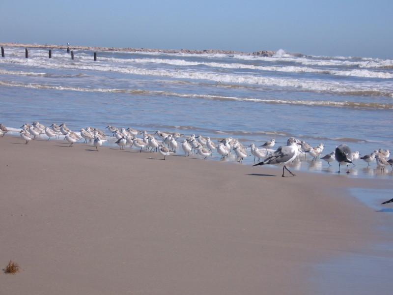 Brids on the beach