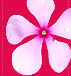 Fresh Flower