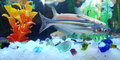 Fishes Picture