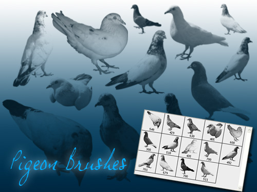 Pigeon Brush