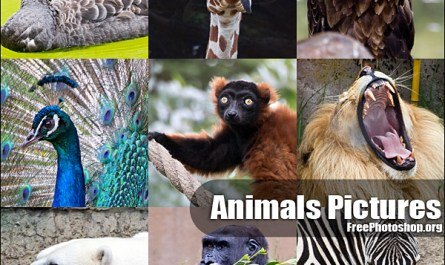 Wild Animals Pictures