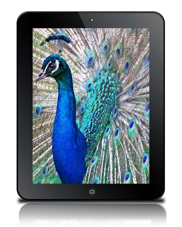 free tablet psd