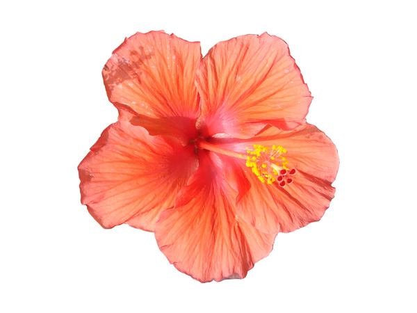 flower psd