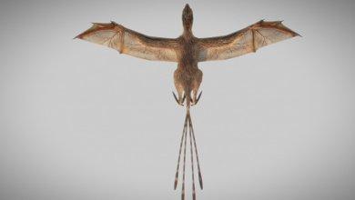 Photo of حفريات لأنواع جديدة من الديناصورات الطائرة استغرقت سنوات لتحليلها  منوعات