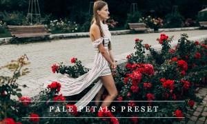 Pale petals - Lightroom preset 1237375