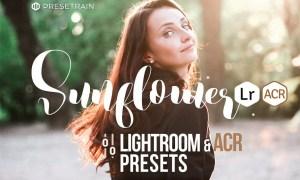 Sunflower Lightroom & ACR Presets 1278632