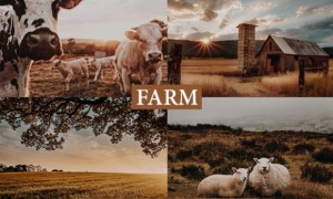 Cinematic Farm Lightroom Presets 4222146