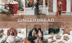 5 Gingerbread Lightroom Presets 5701797