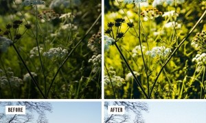 Professional Nature Lightroom Preset (Mobile & Desktop) 30177890