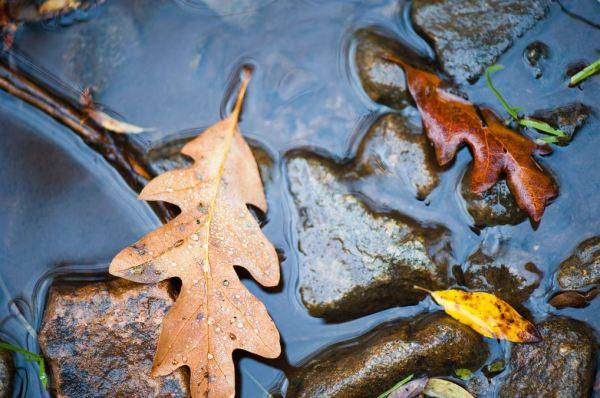 autumnbearsears7