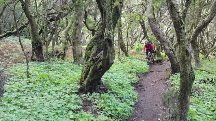 Jungle fever - La Gomera – Trails & Hippies