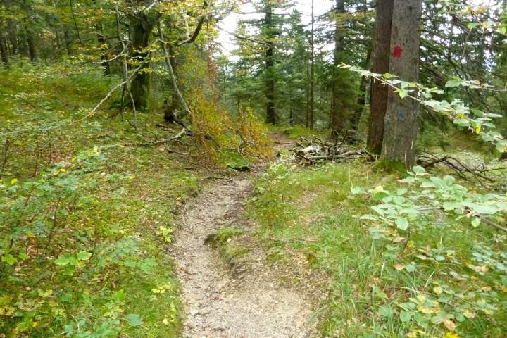 Flow-Trail: Pionierweg