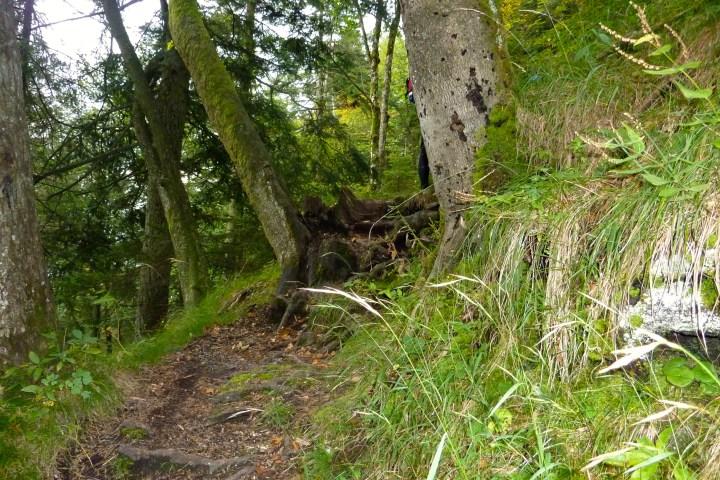 Pionierweg Trail: Hohe, wurzelige Stufe: