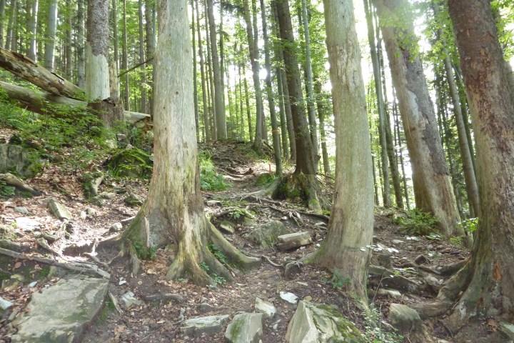 Da geht's runter im Zwiesel-Trail