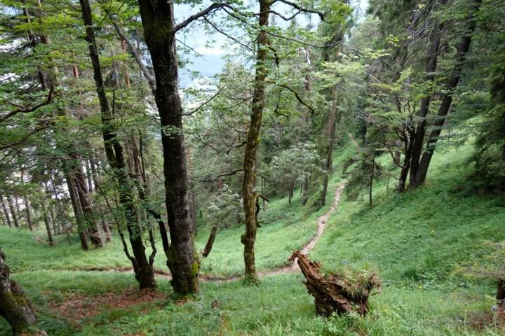 und einer ausgesetzten Querung durch den lichten Bergwald führt
