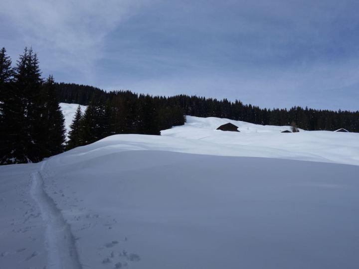 Über schöne Waldschneisen und Almwiesen geht's hoch und auch wieder runter