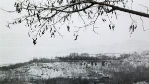 detail from a black and white photo, tree in the foreground, a field in the distance