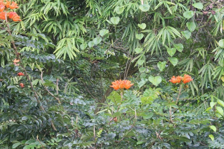 Orange flowers in foliage