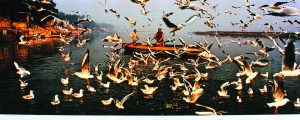 Two men on a boat with dozens of seagulls in the air