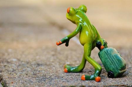 frog luggage