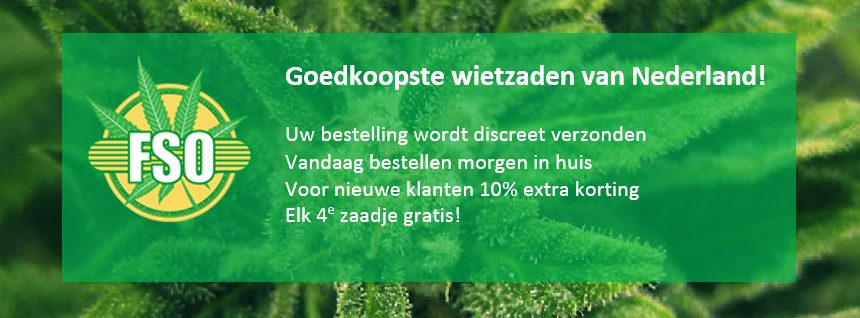 cheapest-cannabis-seeds-in-the-netherlands