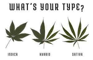 Wat is Hybrid