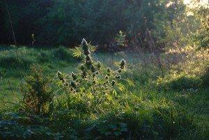 Wat zijn de beste planten voor guerilla kweken