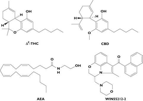 Cannabis, CBD en THC