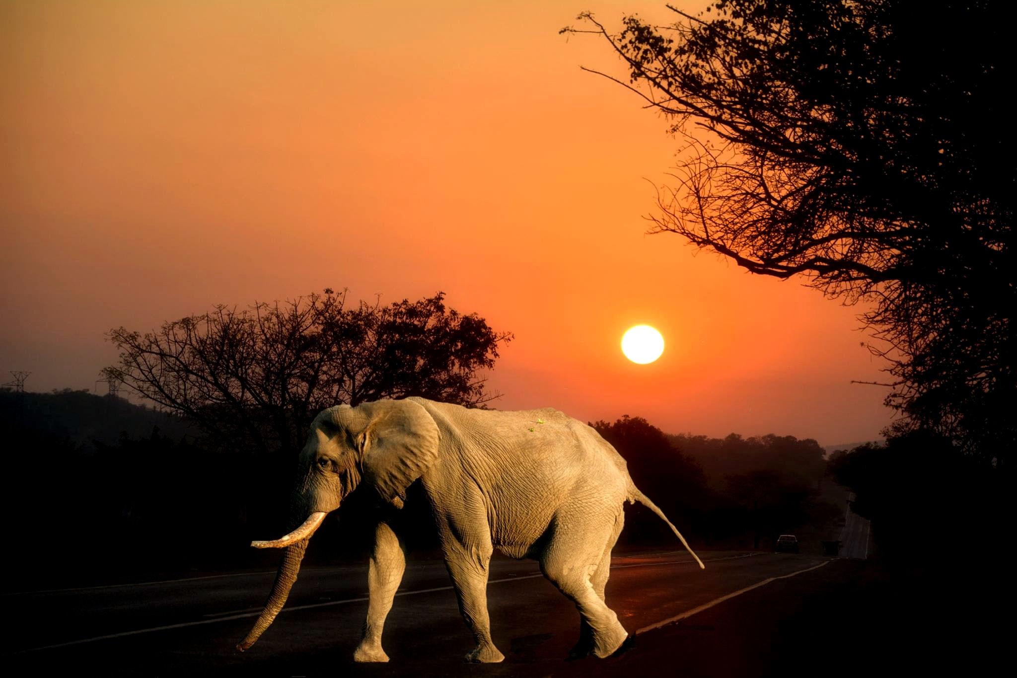 Elefante e o por do sol
