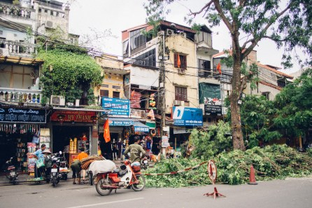 Cutting Trees near Dong Xuan Market