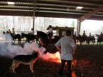 De-spooking clinic with the National Mounted Police Services.
