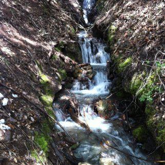Creek in Spring
