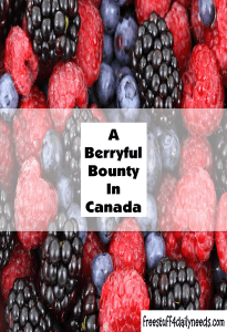 a berryful bounty in canada