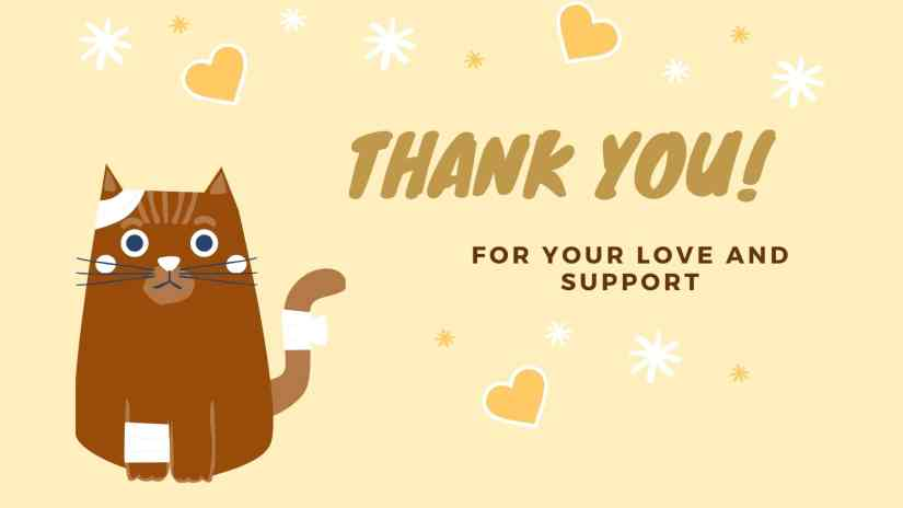 Card showing a cat with band-aids and saying Thank you! for your love and support