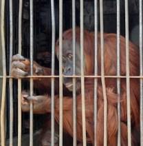 Lopburi Zoo