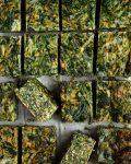 Voici une de mes recettes de base : la quiche végétarienne sans pâte, pleine de légumes de saison ! Ici, vous trouverez mon combo préféré du moment : épinards, carottes et emmental râpé !