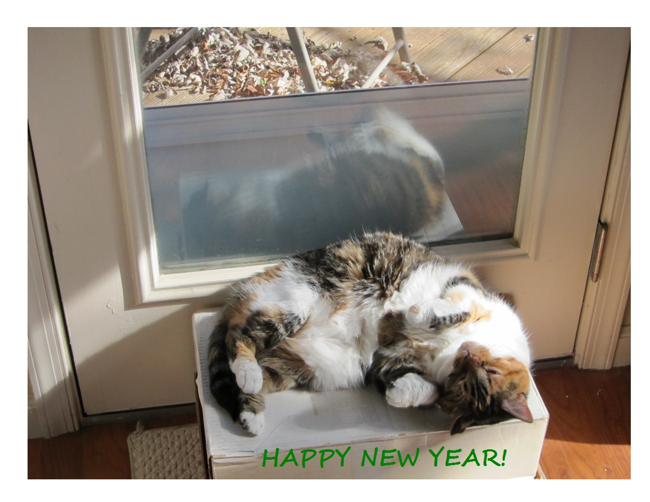 2017_happy_new_year