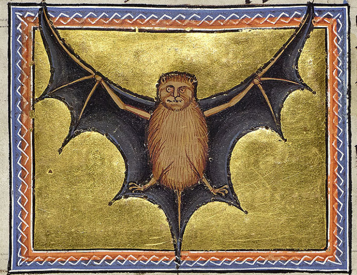 Portrait of the bat. Compared with many other bestiary illustrations, this is a fairly accurate ventral view of a bat whose wings are shown as a membrane stretching from its three fingers down to its toes and tail. Its furry face has the typically uncanny human look. The artist has realised that the flight membrane joins the fingers, legs and tail even though there should be five fingers with four supporting the wing. It is classified as a bird because of its wings rather than as a mammal because of its fur.