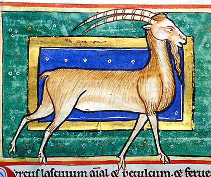 He-Goat, Morgan Library, MS M.81, Folio 40v.