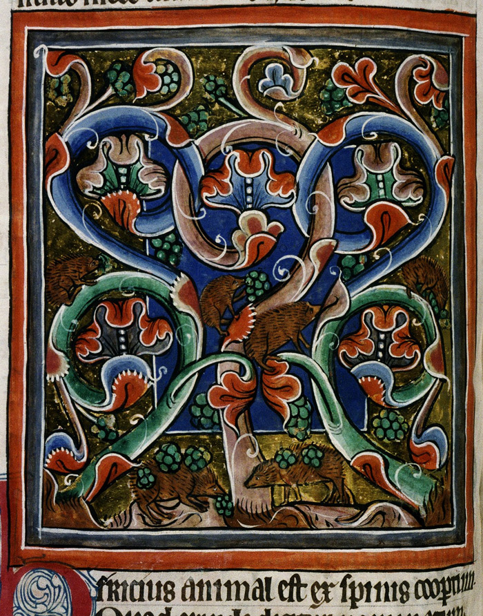 Bodleian Library, MS. Bodley 764, Folio 52v Hedgehogs climb grape vines while others roll on the fallen grapes to stick them to their spines, so they can carry the food home to their families.