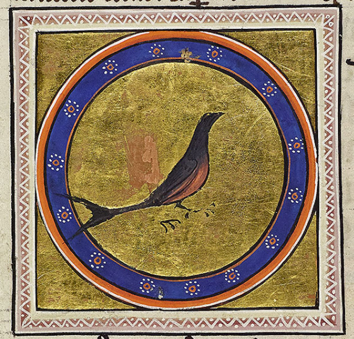 The portrait of the swallow depicts the bird quite accurately with a forked tail, dark back and red breast.