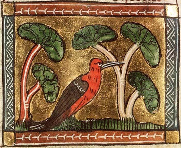 Woodpecker. Koninklijke Bibliotheek, KB, KA 16, Folio 98v.
