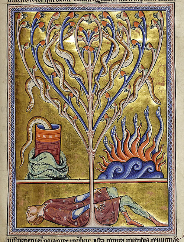 The tree writhes with salamanders; a salamander poisons a well; salamanders leap from flames; a man lies poisoned at the foot of the tree. The image of a man lying dead at the foot of a tree relates to the Tree of Jesse iconography. Above him a salamander plunges into a tub, an episode illustrated in Bern 318 f. 14v. The other salamanders are poisoning fruit in a tree and surviving in a fire. In certain conditions a bonfire can appear to be releasing live, red, wriggling snakes when the wood is damp and the flying sparks carry long red tails. The saura goes blind, enters a crack in the wall, faces the sun and regains its sight. The stellio or newt has spots over his body.