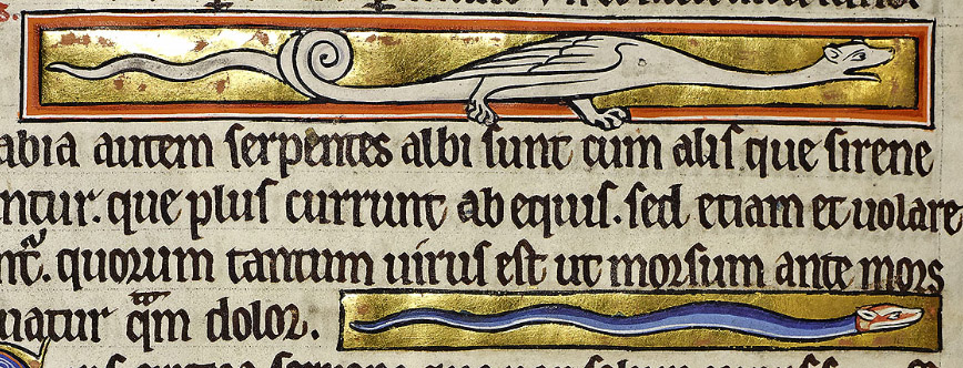 The speedy siren is at the top of the page. The small seps is seen in profile. The lizard has legs as well as arms.