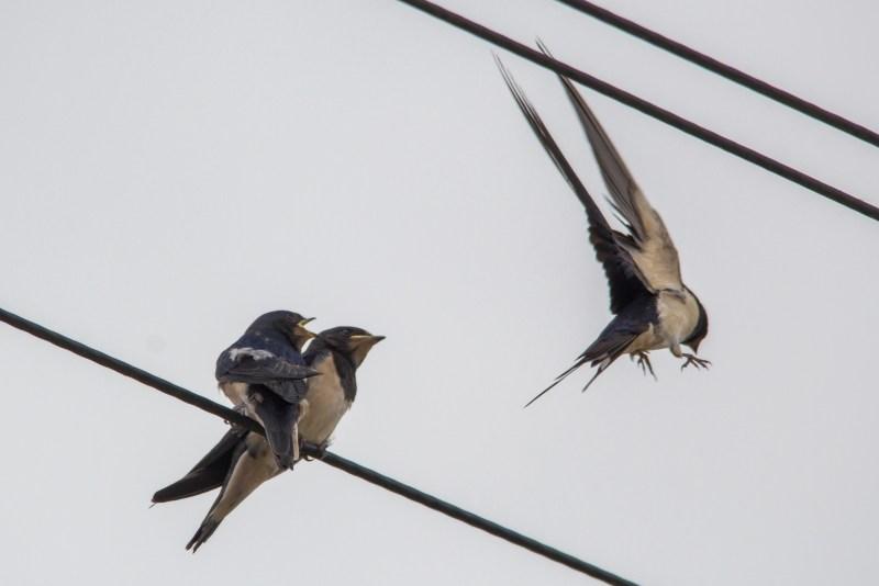 Adult flying away